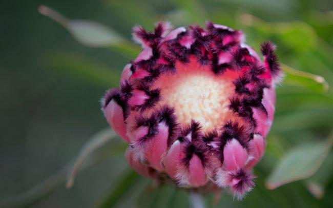 Peninsula Wild Flower | Mornington Peninsula Wild Flowers & Bloom Boutique