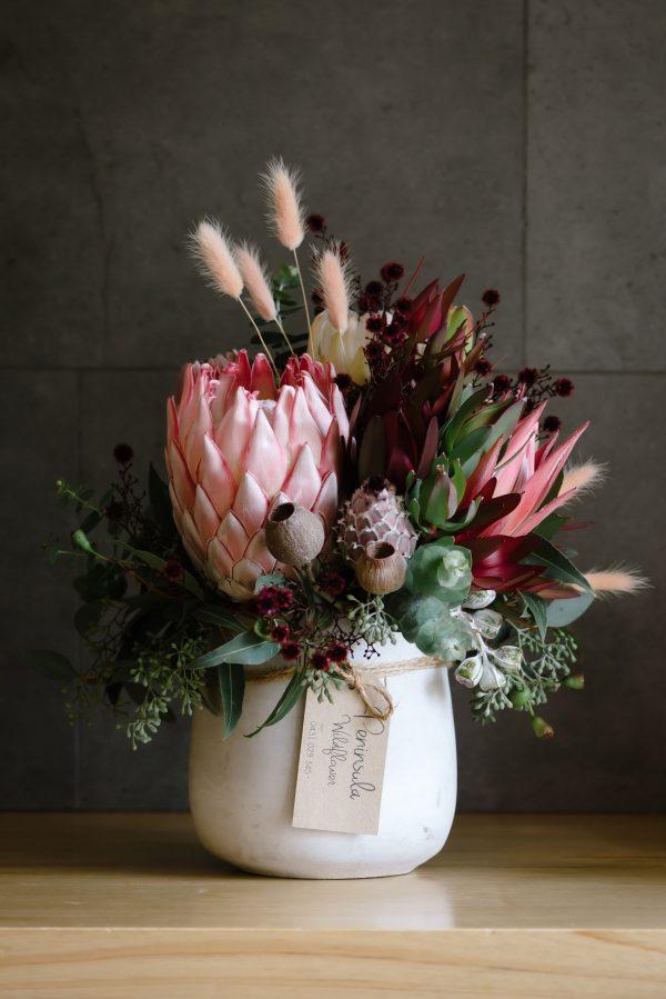 Protea in a pot