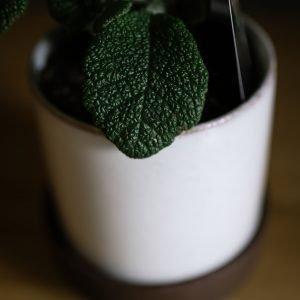 Pot plant delivery Mornington Peninsula